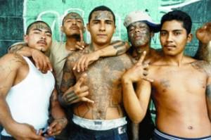 gang - ms13